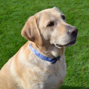 Personalised Paw Print Pet Collar